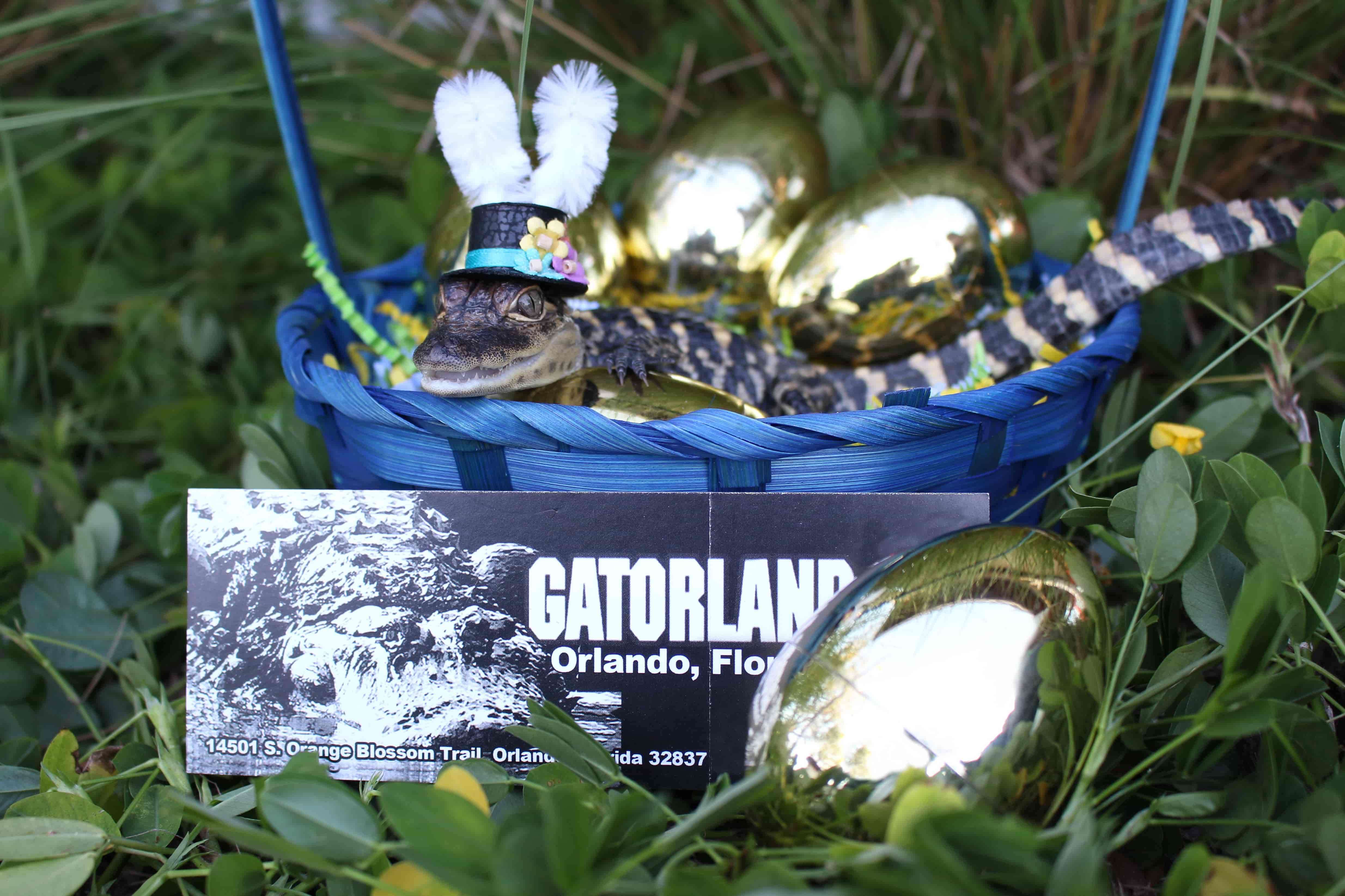 gators spot Easter egg hunt